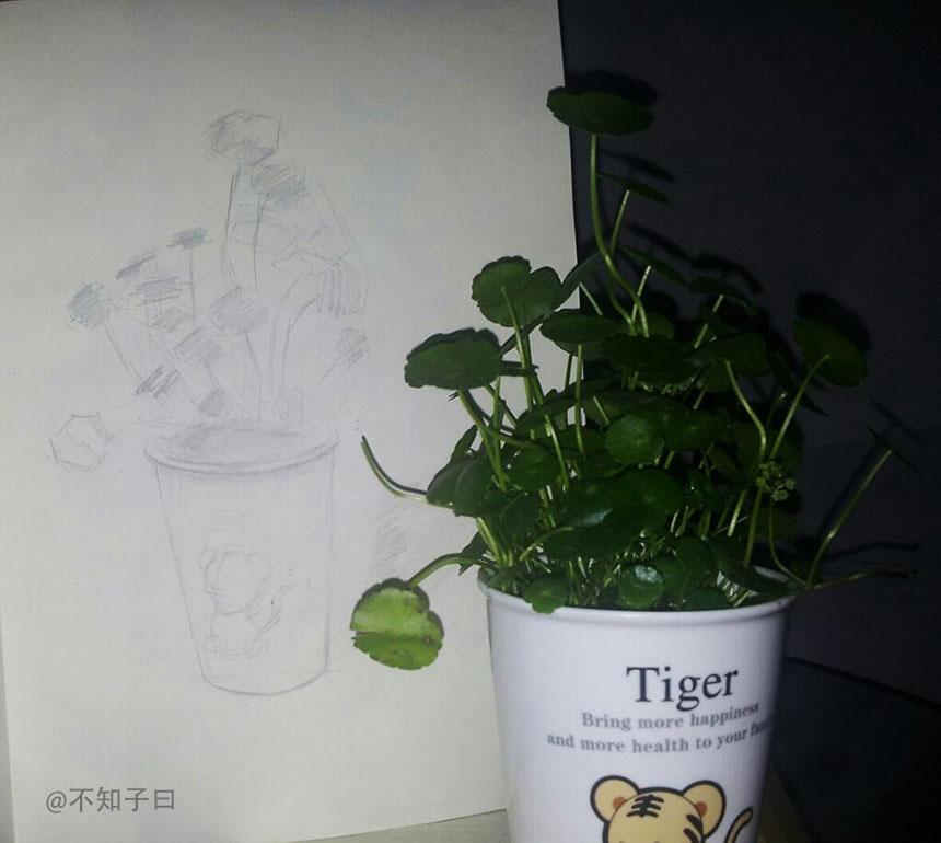 未解_老虎杯_铜钱草_素描_、.jpg